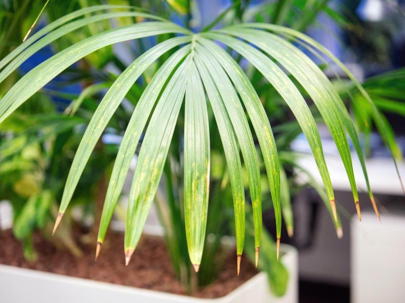 vorsicht diese zimmerpflanzen sind f r kinder giftig wohnen. Black Bedroom Furniture Sets. Home Design Ideas